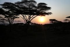 Sonnenuntergang in Serengeti/Tansania